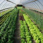 Dutchess Farm Celebrates 30 Years