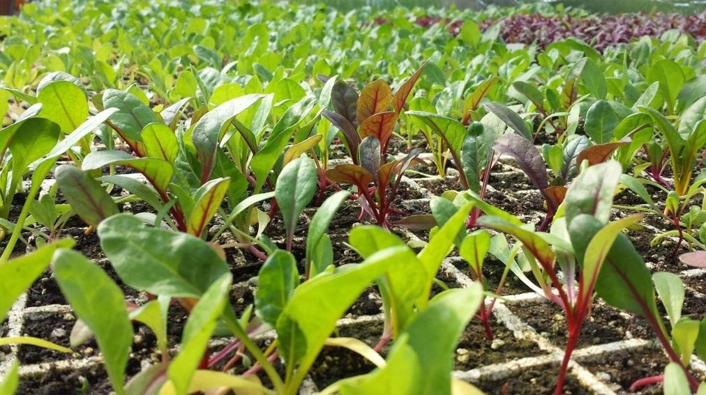 Dutchess Farm Plants