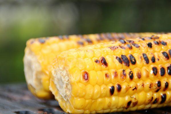 corn, organic